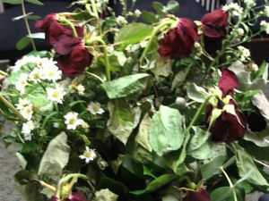 former-roses-001.jpg
