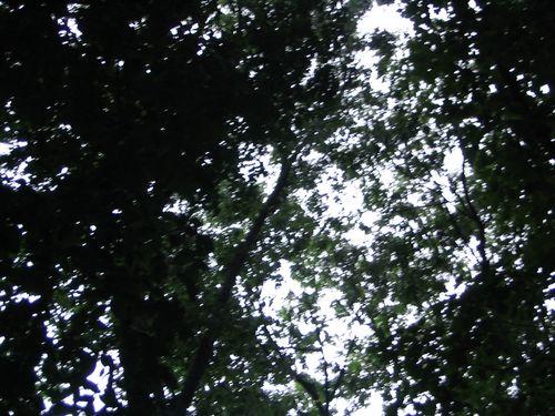 central-park-61607-006a.jpg