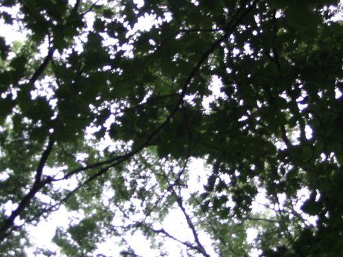 central-park-61607-007a.jpg
