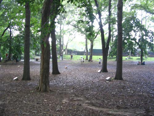 central-park-61607-009a.jpg