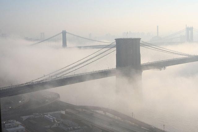 stelmaria_fog.jpg