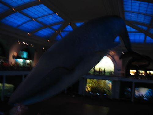 The magnificent Blue Whale