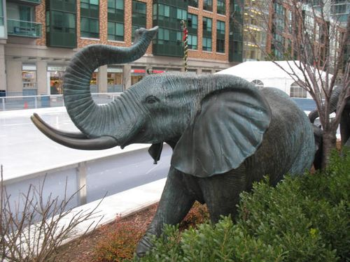 Elephants by an ice rink
