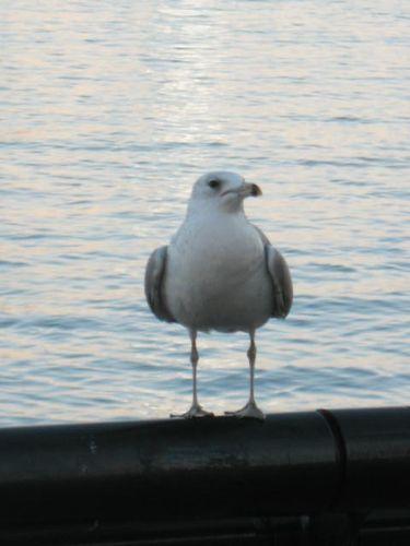 12.8.09 Hoboken 019