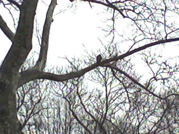 Hawk in the center of the photo