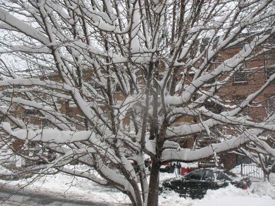 2.26.10 Snowstorm hoboken 001